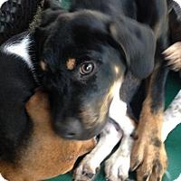 Adopt A Pet :: Garth - Groveland, FL