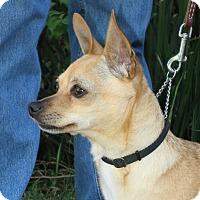 Adopt A Pet :: Lina - Tracy, CA