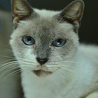 Adopt A Pet :: 10311988 - Brooksville, FL