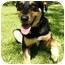 Photo 3 - Doberman Pinscher/Labrador Retriever Mix Dog for adoption in Mocksville, North Carolina - Juneau