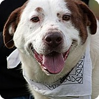 Adopt A Pet :: Whiskey - Scotland Neck, NC