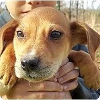 Adopt A Pet :: Duggan - Allentown, PA