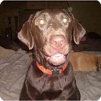 Adopt A Pet :: Jesse - North Jackson, OH