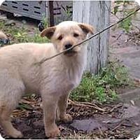 Adopt A Pet :: Chase - courtesy post - Glastonbury, CT