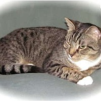 Adopt A Pet :: Dottie - Oxford, CT