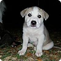 Adopt A Pet :: Rosebud - New Boston, NH