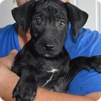 Adopt A Pet :: Breeze-adoption in progress - Marshfield, MA