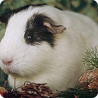 Adopt A Pet :: Makenzie - Santa Barbara, CA
