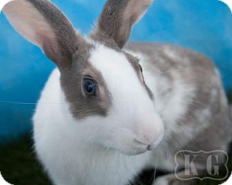 Dutch for adoption in Pflugerville, Texas - Mister
