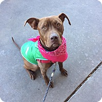 Mastiff/Mixed Breed (Medium) Mix Dog for adoption in Iowa Park, Texas - Reba