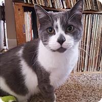 Adopt A Pet :: Casper - Port Huron, MI