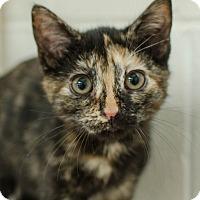 Adopt A Pet :: Phoebe - Greenwood, SC