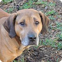 Adopt A Pet :: CURRY - Grand Island, FL
