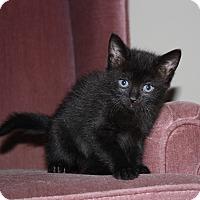 Adopt A Pet :: Ella - Armuchee, GA