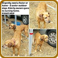 Adopt A Pet :: SIMBA & NALA, M&F - Malvern, AR