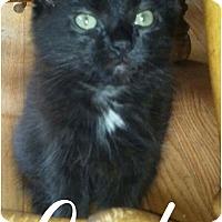 Adopt A Pet :: Opal - Princeton, WV