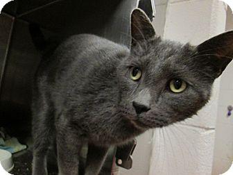 Domestic Shorthair Cat for adoption in Marietta, Georgia - SALLY