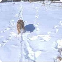 Adopt A Pet :: Red - Durango, CO