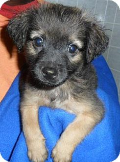 Terrier (Unknown Type, Medium)/Boxer Mix Puppy for adoption in Bartonsville, Pennsylvania - Emmet
