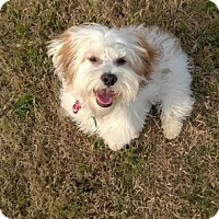 Adopt A Pet :: DICKENS - Fort Worth, TX