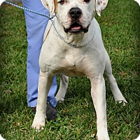 Adopt A Pet :: Nicky - Miami, FL