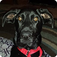 Adopt A Pet :: Jameson - Plainfield, IL