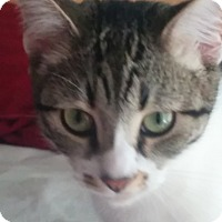 Adopt A Pet :: Tara - San Fernando Valley, CA