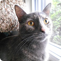 Adopt A Pet :: Amy - Richland, MI