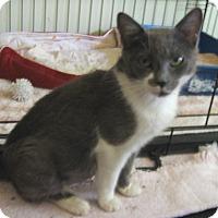 Adopt A Pet :: Grace - Colmar, PA