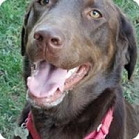 Adopt A Pet :: Bullett1 - Torrance, CA