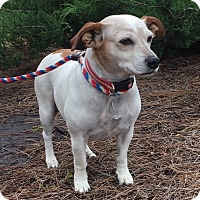 Adopt A Pet :: Lady Bug - Irmo, SC