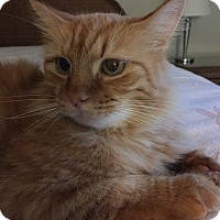Adopt A Pet :: Ginger - Cincinnati, OH