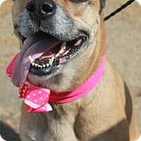 Adopt A Pet :: VALOVA - Clayton, NJ