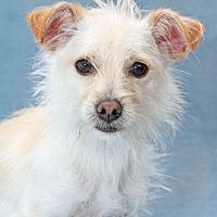 Adopt A Pet :: Juilliard - Encinitas, CA