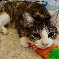 Adopt A Pet :: Calliope - St. Louis, MO