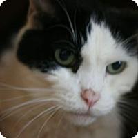 Adopt A Pet :: Dodger - Canoga Park, CA