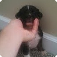 Adopt A Pet :: Miranda - Washington, NC