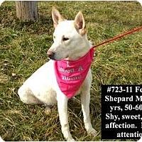 Adopt A Pet :: # 723-11 @ Animal Shelter - Zanesville, OH