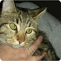 Adopt A Pet :: Tigerlilly - Washington Terrace, UT