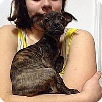 Adopt A Pet :: Tyler - Marlton, NJ