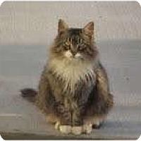 Adopt A Pet :: Rigsby - Arlington, VA