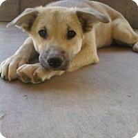 Adopt A Pet :: Tiffany - Only $85 adoption! - Litchfield Park, AZ