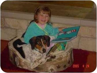 Beagle/Bluetick Coonhound Mix Puppy for adoption in Buffalo, New York - Willie: Loves Children!