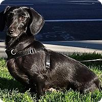 Adopt A Pet :: Vienna - Simi Valley, CA