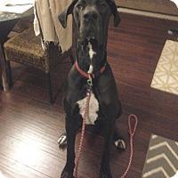 Adopt A Pet :: Boone - Stevens Point, WI