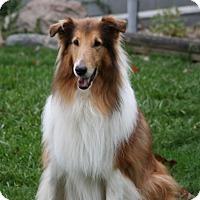 Adopt A Pet :: Sarge - Powell, OH