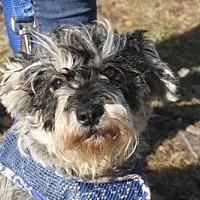 Adopt A Pet :: Chula - New Monmouth, NJ