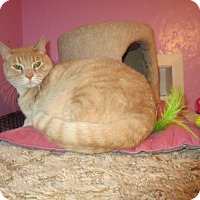 Adopt A Pet :: Dusty - Coos Bay, OR
