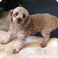 Adopt A Pet :: Emmy - Atlanta, GA