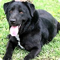 Adopt A Pet :: Micko - Deer Park, NY